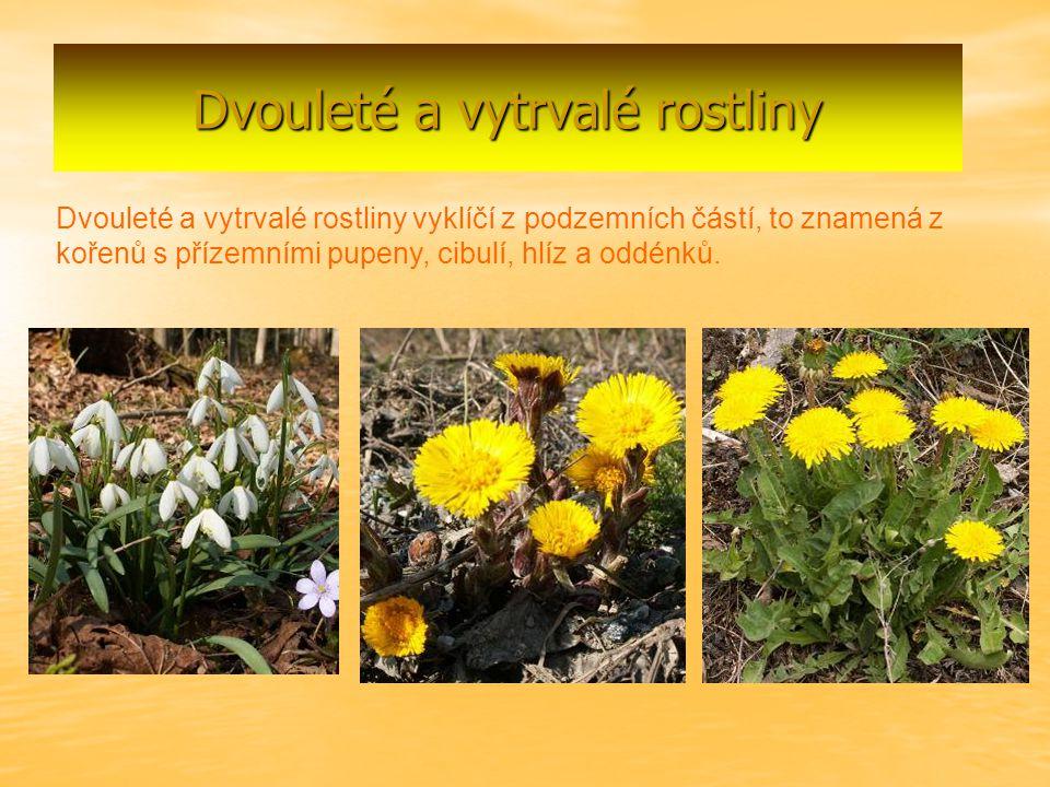 Dvouleté a vytrvalé rostliny