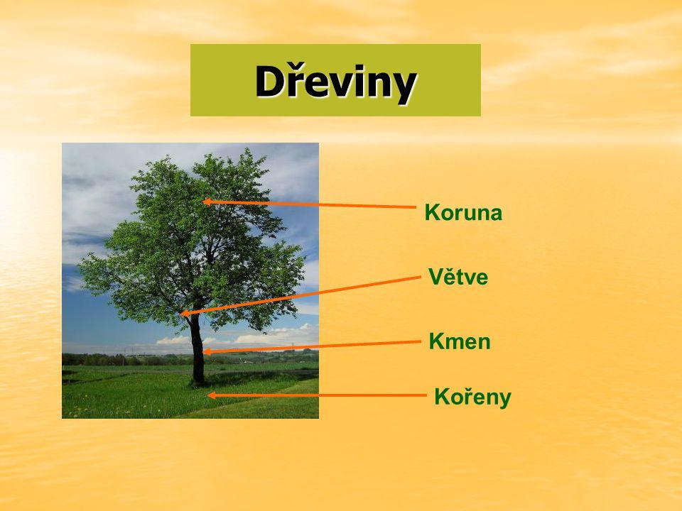 Dřeviny Koruna Větve Kmen Kořeny