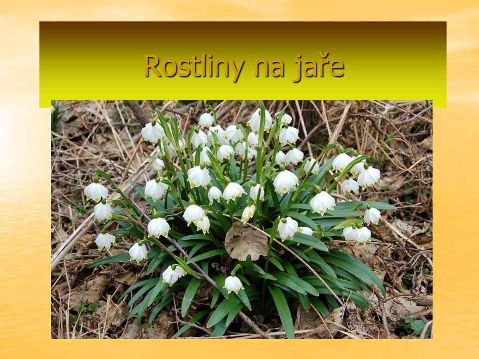 Rostliny na jaře