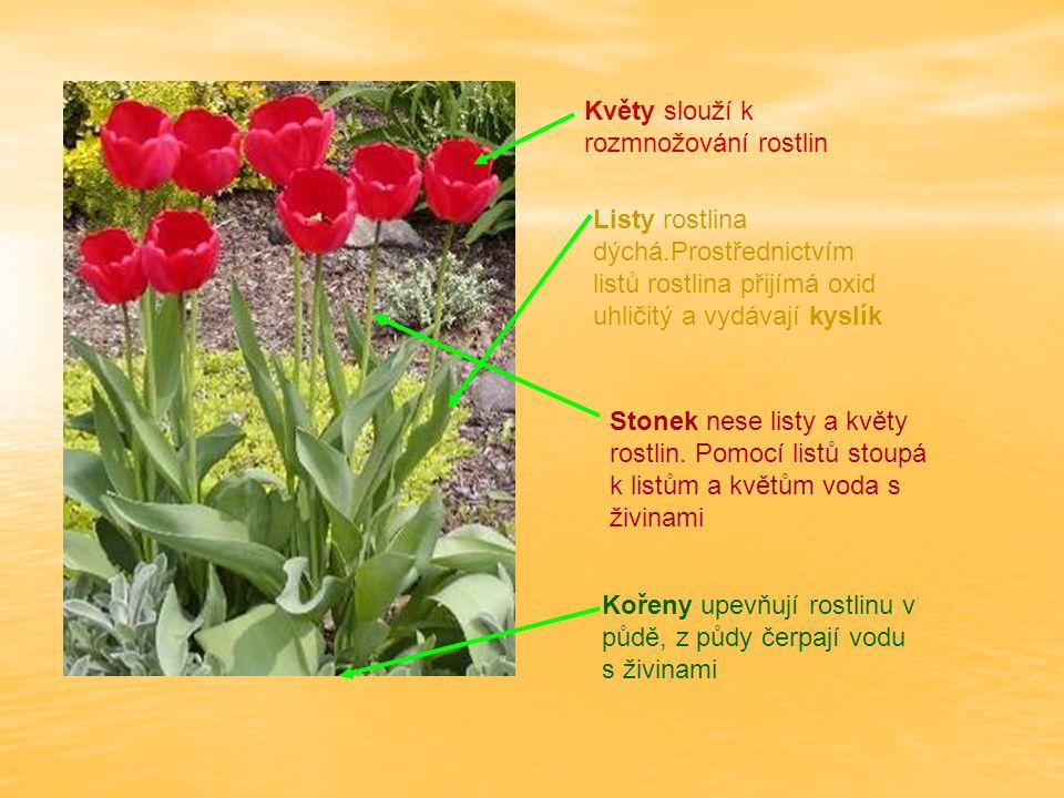 Květy slouží k rozmnožování rostlin