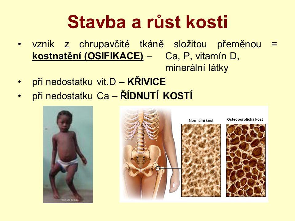 Stavba a růst kosti vznik z chrupavčité tkáně složitou přeměnou = kostnatění (OSIFIKACE) – Ca, P, vitamín D, minerální látky.