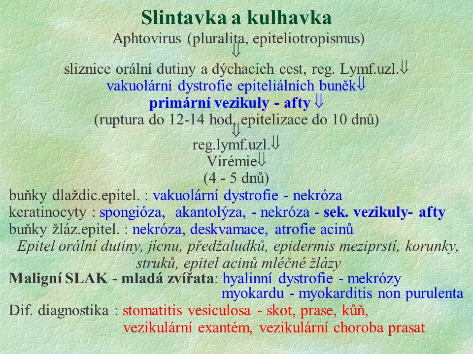 Slintavka a kulhavka Aphtovirus (pluralita, epiteliotropismus) 