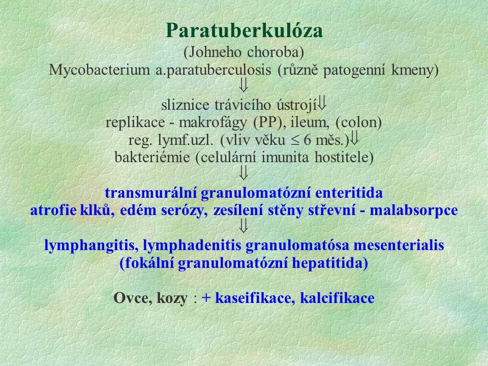 Paratuberkulóza (Johneho choroba)