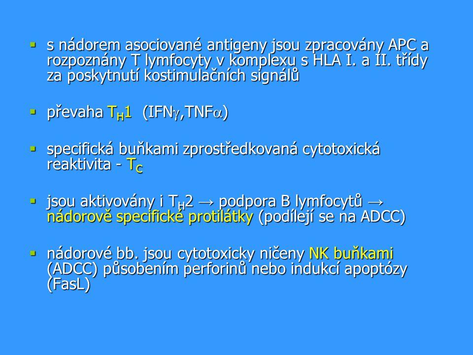 s nádorem asociované antigeny jsou zpracovány APC a rozpoznány T lymfocyty v komplexu s HLA I. a II. třídy za poskytnutí kostimulačních signálů