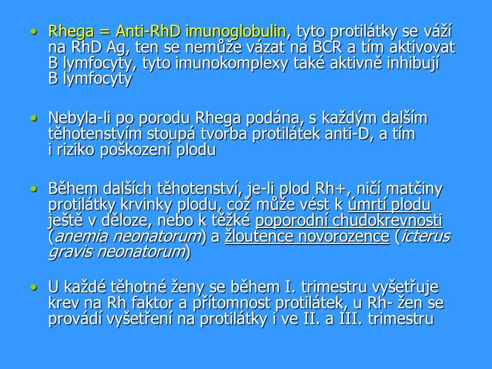 Rhega = Anti-RhD imunoglobulin, tyto protilátky se váží na RhD Ag, ten se nemůže vázat na BCR a tím aktivovat B lymfocyty, tyto imunokomplexy také aktivně inhibují B lymfocyty