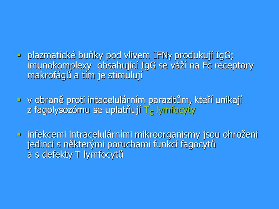 plazmatické buňky pod vlivem IFNg produkují IgG; imunokomplexy obsahující IgG se váží na Fc receptory makrofágů a tím je stimulují
