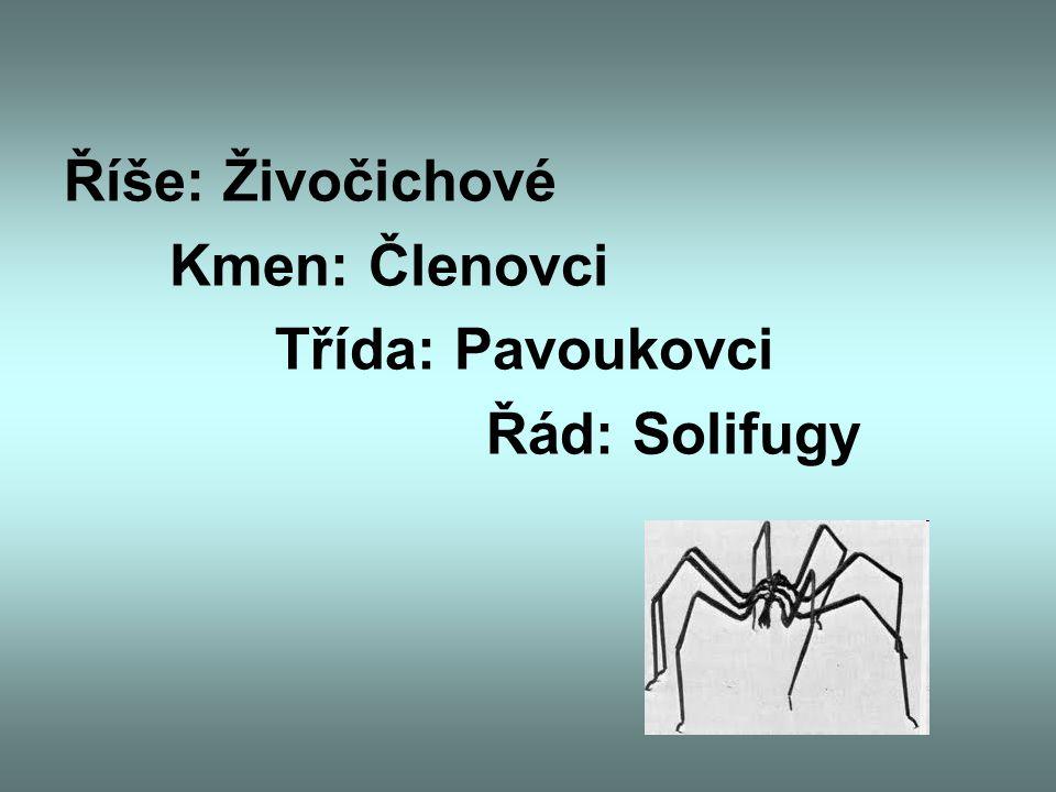Říše: Živočichové Kmen: Členovci Třída: Pavoukovci Řád: Solifugy