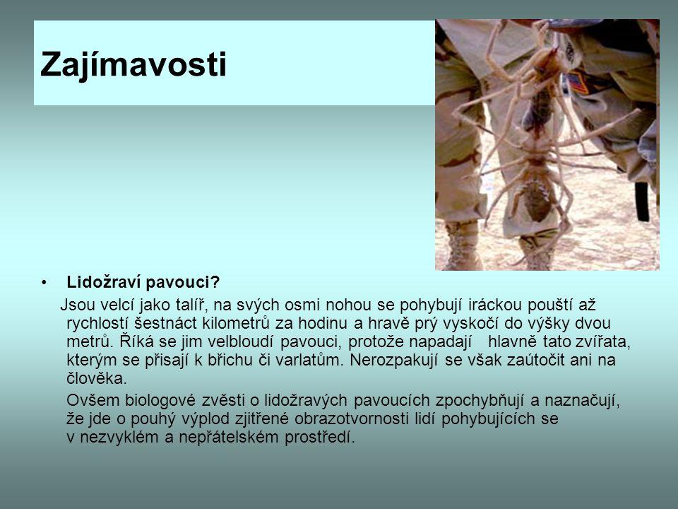 Zajímavosti Lidožraví pavouci