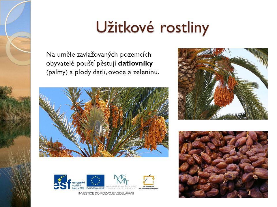 Užitkové rostliny Na uměle zavlažovaných pozemcích obyvatelé pouští pěstují datlovníky (palmy) s plody datlí, ovoce a zeleninu.