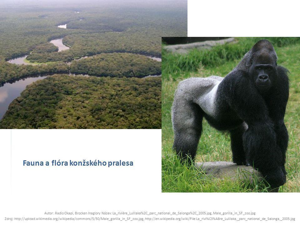 Fauna a flóra konžského pralesa