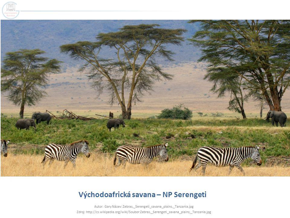 Východoafrická savana – NP Serengeti
