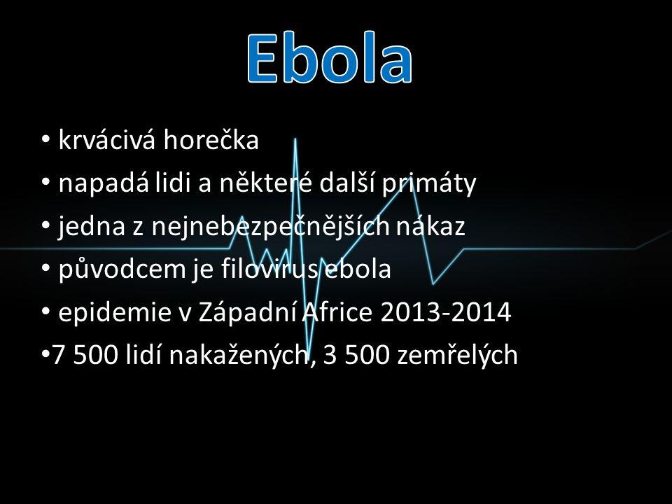 Ebola krvácivá horečka napadá lidi a některé další primáty