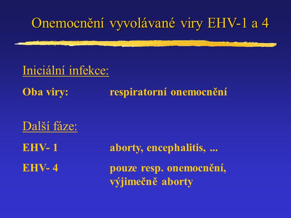 Onemocnění vyvolávané viry EHV-1 a 4