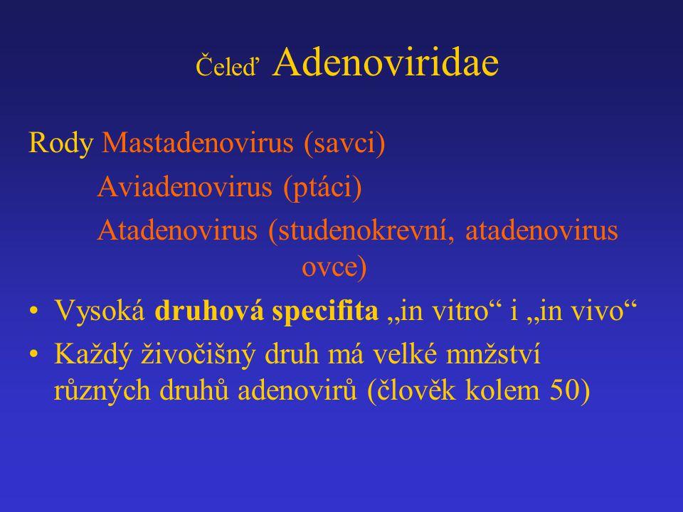 Rody Mastadenovirus (savci) Aviadenovirus (ptáci)