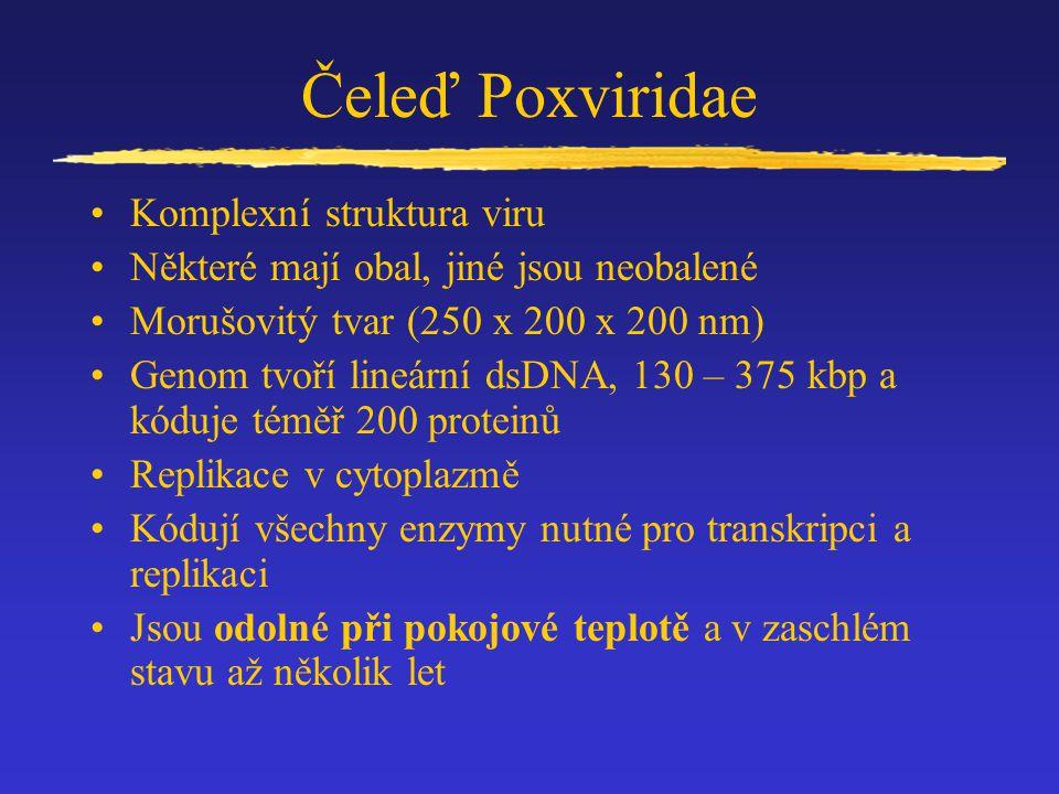 Čeleď Poxviridae Komplexní struktura viru