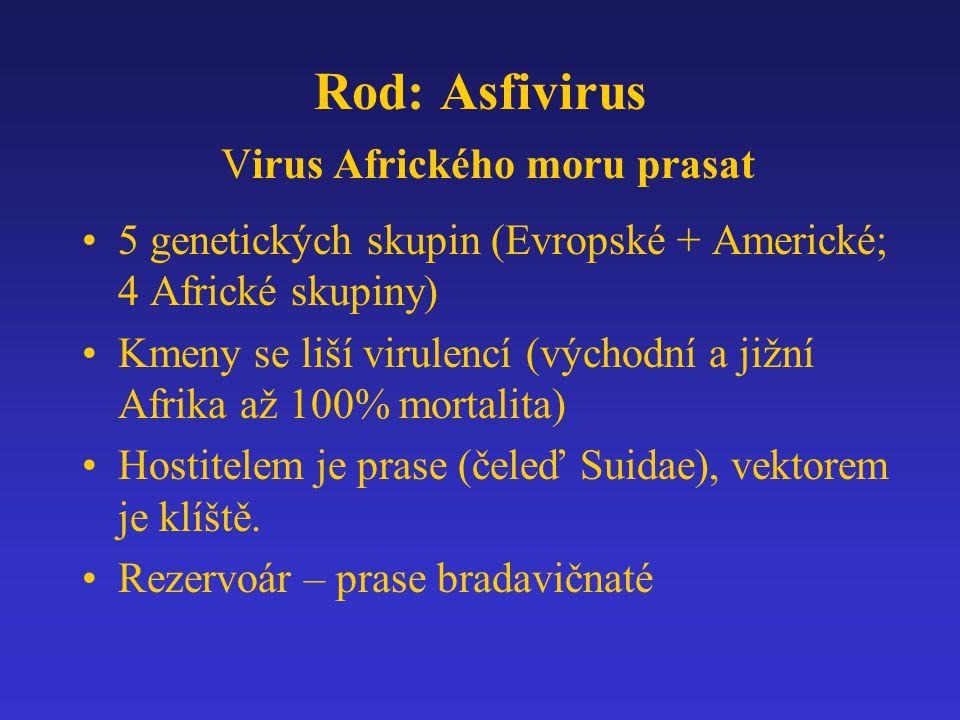 Rod: Asfivirus Virus Afrického moru prasat