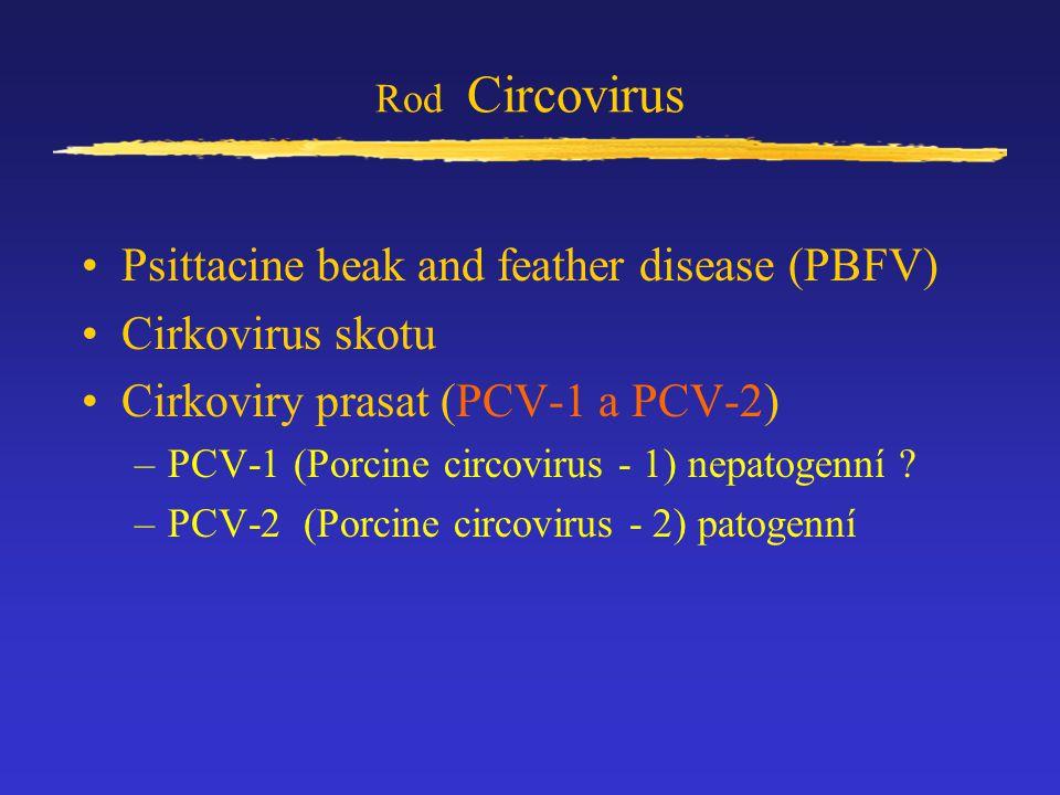 Psittacine beak and feather disease (PBFV) Cirkovirus skotu