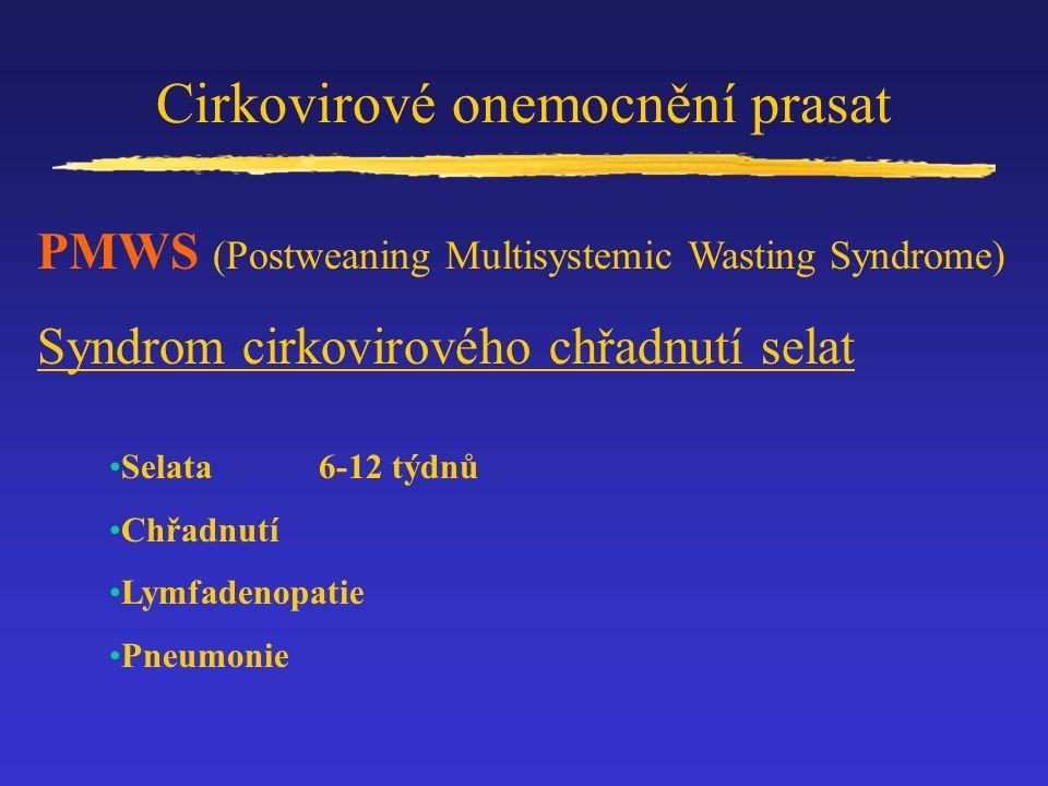Cirkovirové onemocnění prasat