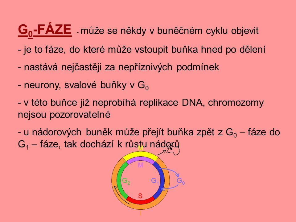 G0-FÁZE - může se někdy v buněčném cyklu objevit