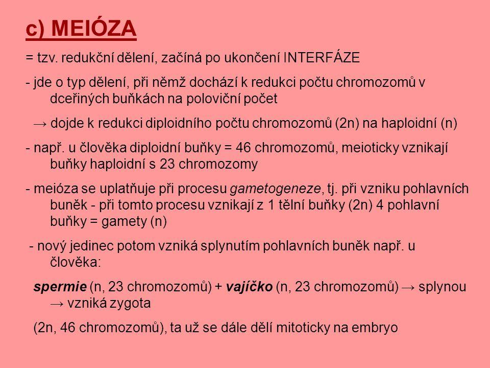 c) MEIÓZA = tzv. redukční dělení, začíná po ukončení INTERFÁZE