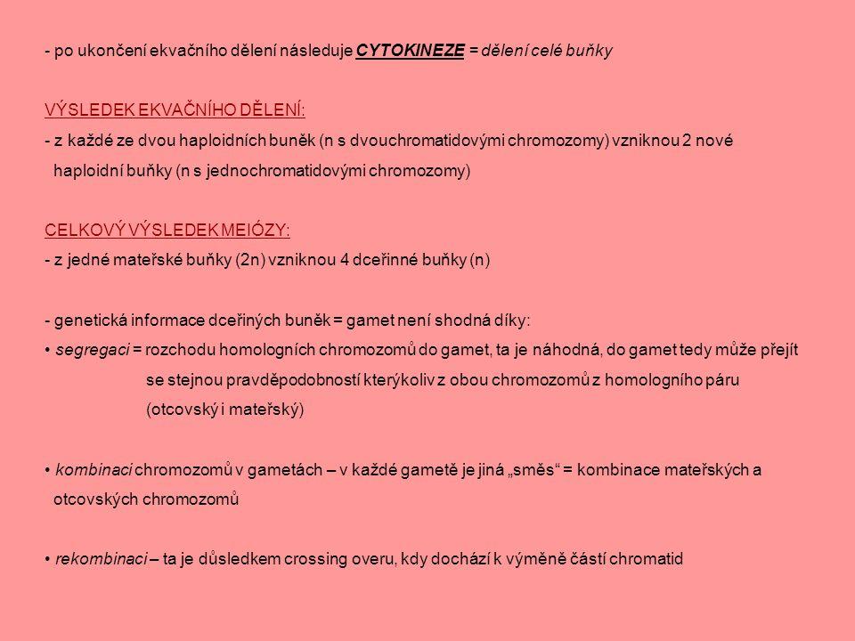 - po ukončení ekvačního dělení následuje CYTOKINEZE = dělení celé buňky
