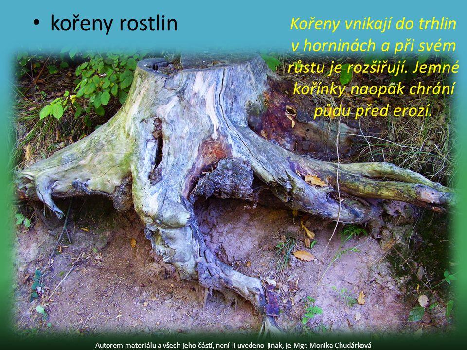 kořeny rostlin Kořeny vnikají do trhlin v horninách a při svém růstu je rozšiřují. Jemné kořínky naopak chrání půdu před erozí.