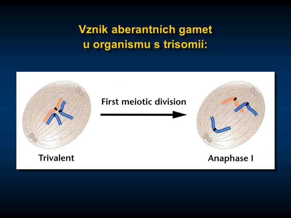 Vznik aberantních gamet u organismu s trisomií:
