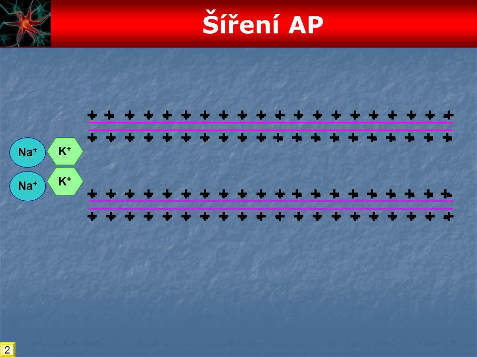 Šíření AP - + + - - + - + - + + - + - + - + - - + - + - + + - - + + -
