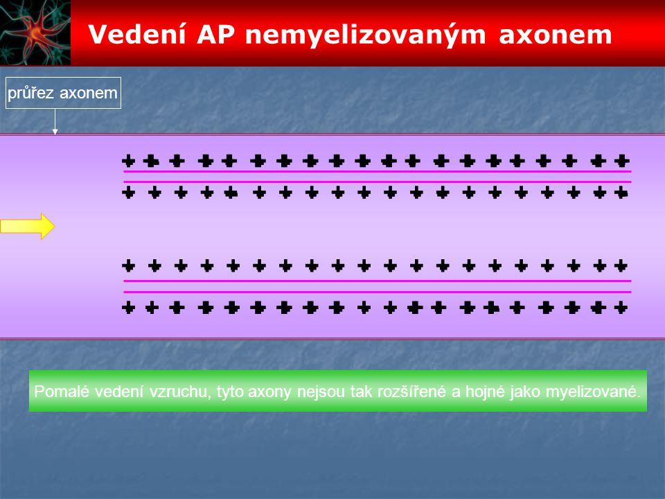 Vedení AP nemyelizovaným axonem