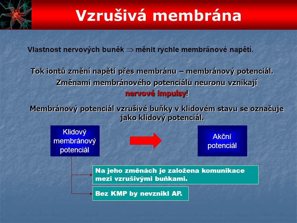 Vzrušivá membrána Vlastnost nervových buněk  měnit rychle membránové napětí. Tok iontů změní napětí přes membránu – membránový potenciál.