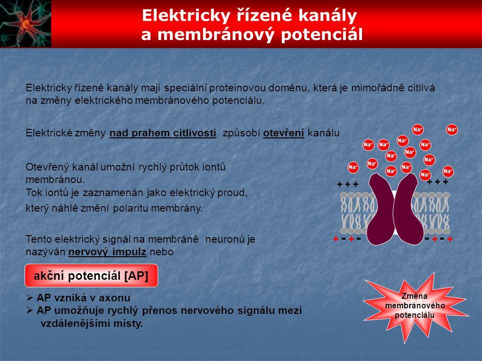 Elektricky řízené kanály a membránový potenciál