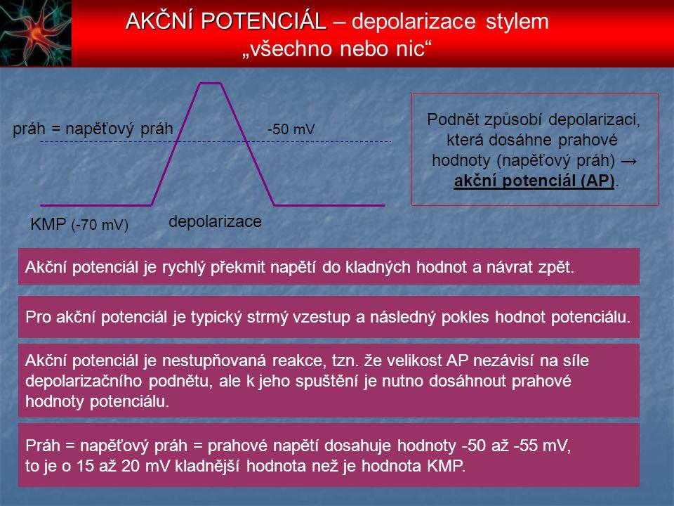 """AKČNÍ POTENCIÁL – depolarizace stylem """"všechno nebo nic"""