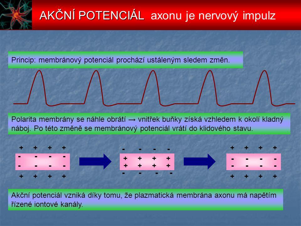 AKČNÍ POTENCIÁL axonu je nervový impulz