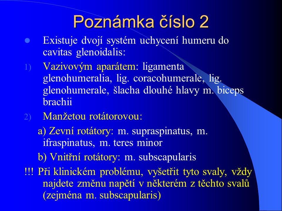 Poznámka číslo 2 Existuje dvojí systém uchycení humeru do cavitas glenoidalis: