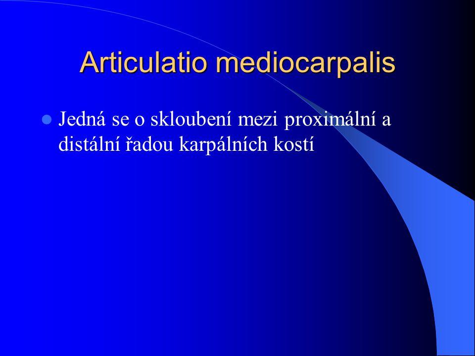 Articulatio mediocarpalis