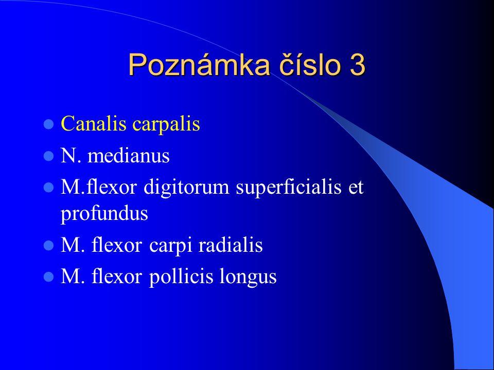 Poznámka číslo 3 Canalis carpalis N. medianus