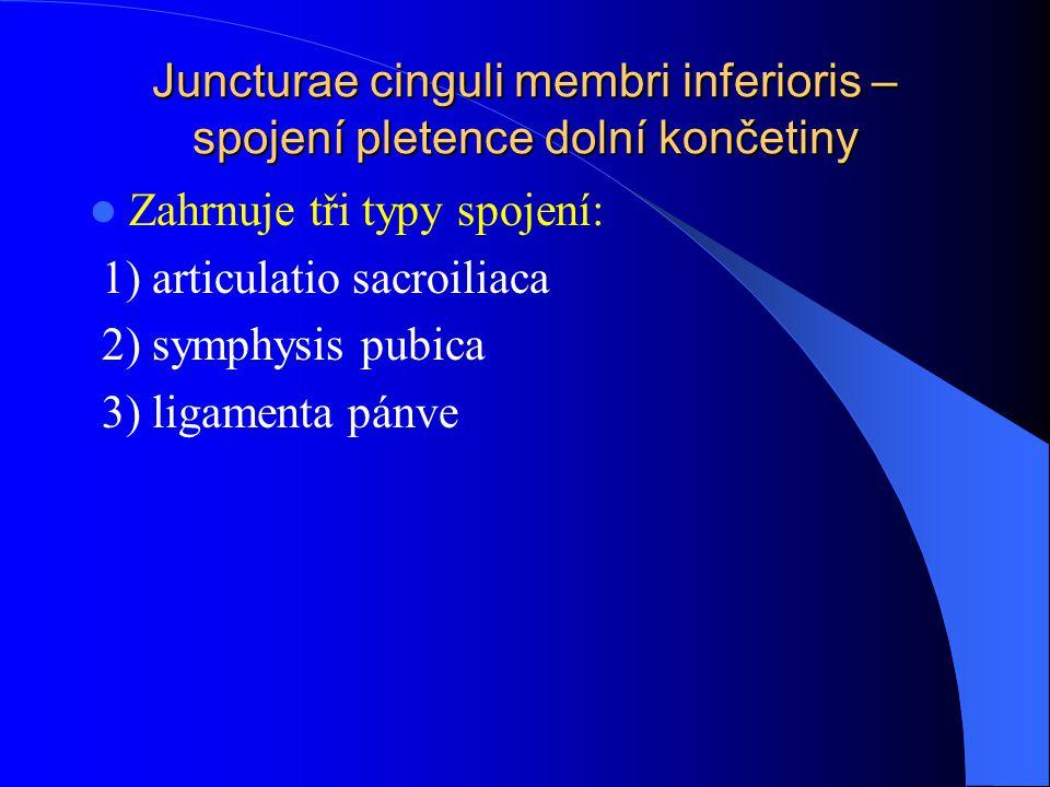 Juncturae cinguli membri inferioris – spojení pletence dolní končetiny
