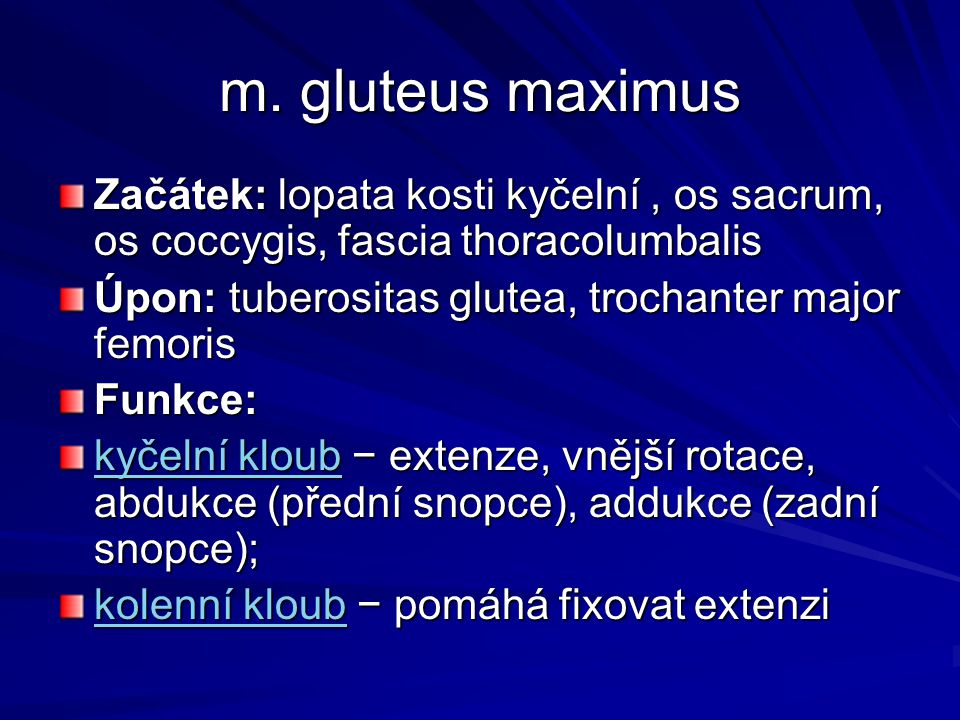 m. gluteus maximus Začátek: lopata kosti kyčelní , os sacrum, os coccygis, fascia thoracolumbalis.