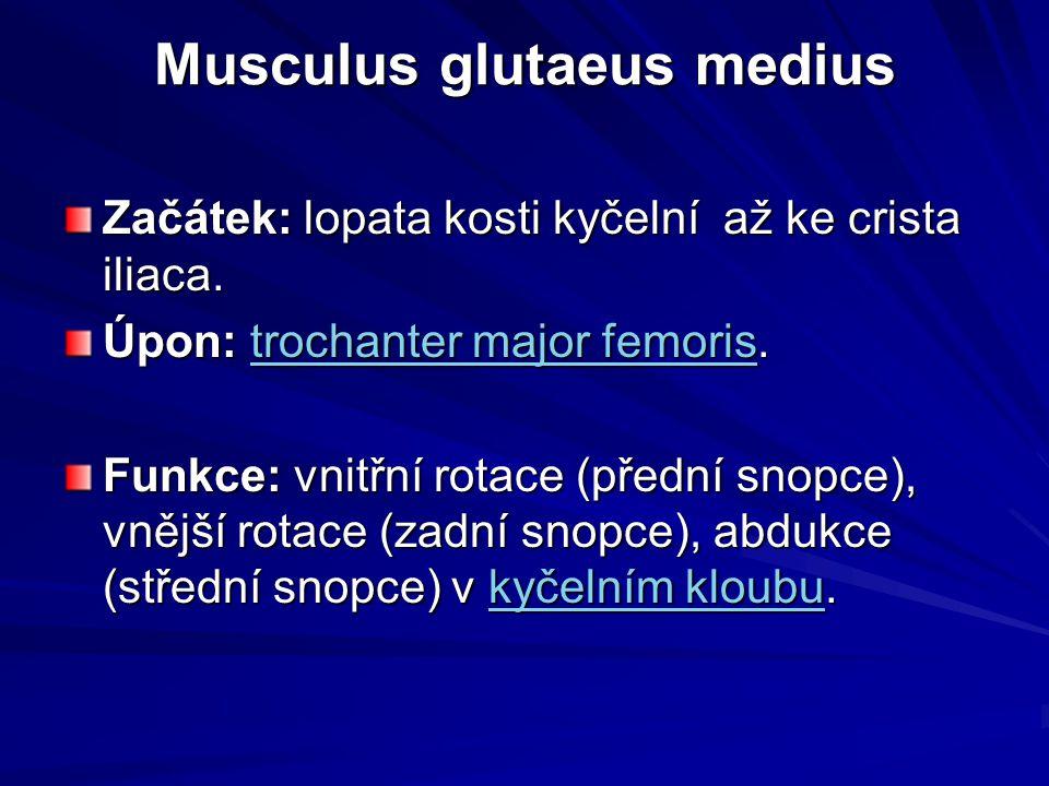 Musculus glutaeus medius