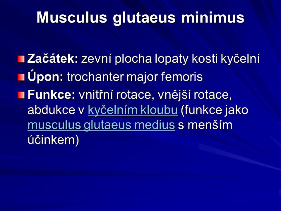 Musculus glutaeus minimus