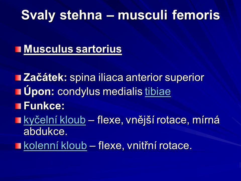 Svaly stehna – musculi femoris