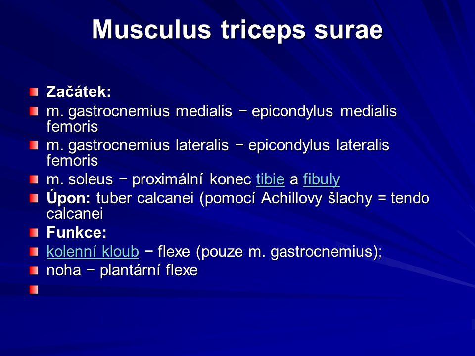 Musculus triceps surae
