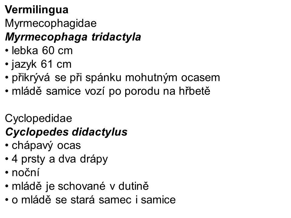 Vermilingua Myrmecophagidae. Myrmecophaga tridactyla. lebka 60 cm. jazyk 61 cm. přikrývá se při spánku mohutným ocasem.