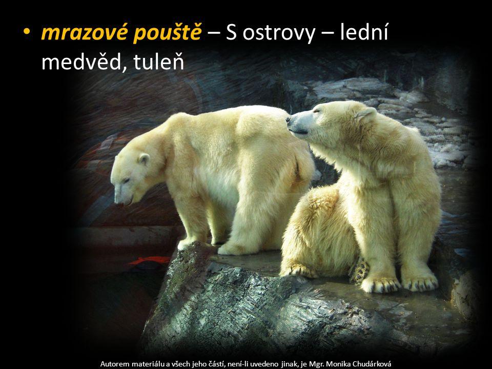 mrazové pouště – S ostrovy – lední medvěd, tuleň