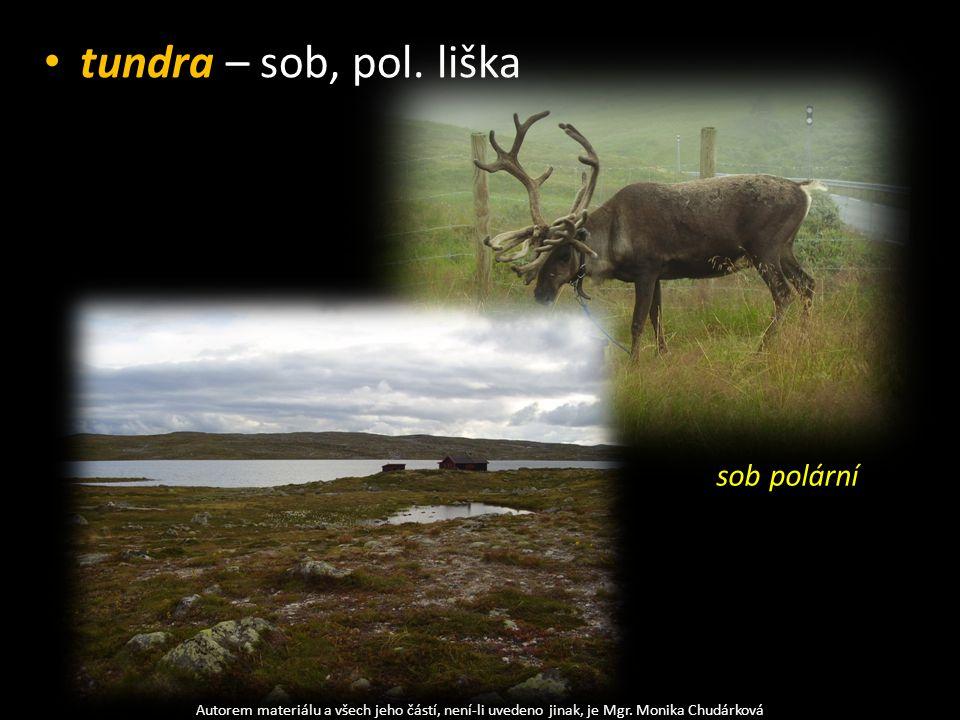 tundra – sob, pol. liška sob polární