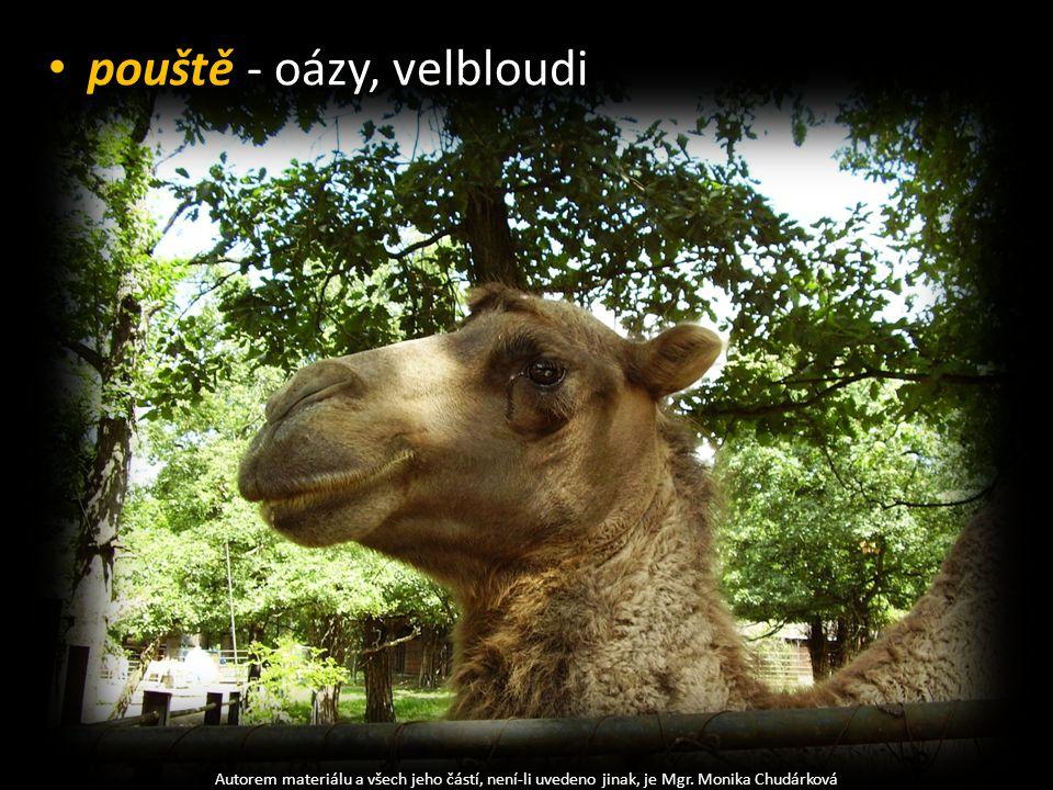 pouště - oázy, velbloudi