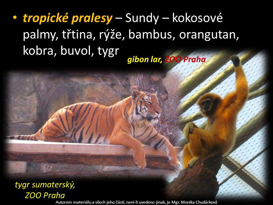 tygr sumaterský, ZOO Praha