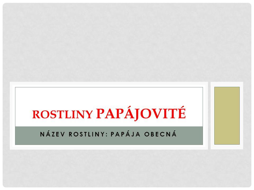 Název rostliny: Papája obecná