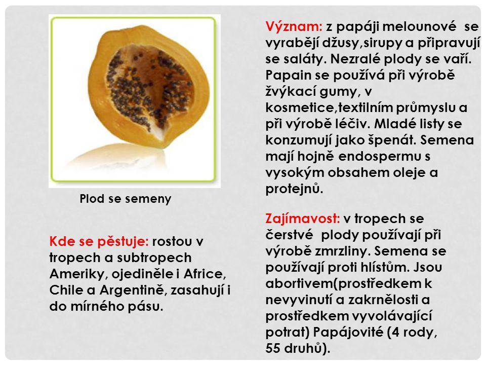 Význam: z papáji melounové se vyrabějí džusy,sirupy a připravují se saláty. Nezralé plody se vaří. Papain se používá při výrobě žvýkací gumy, v kosmetice,textilním průmyslu a při výrobě léčiv. Mladé listy se konzumují jako špenát. Semena mají hojně endospermu s vysokým obsahem oleje a protejnů.