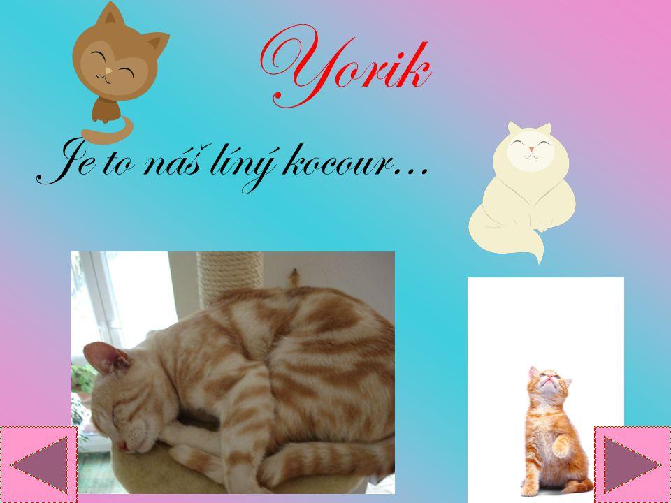 Yorik Je to náš líný kocour…